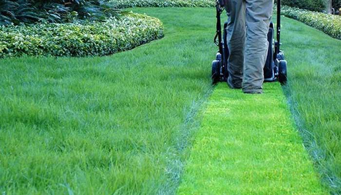 Como cortar grama de maneira eficiente?